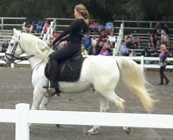 Lipizzan galloping across the arena, overseen by the watchful eyes of Ms Hermann, near Myakka City, FL.